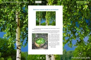 Birch trees: natural remedy in your backyard